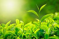 green plant growing in field