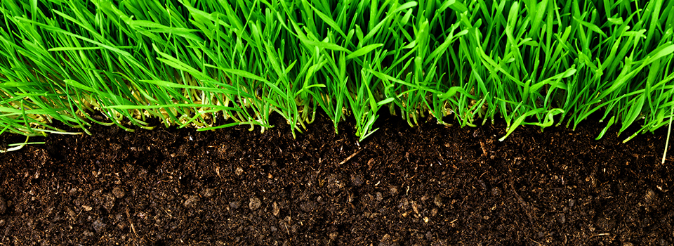 healthy-grass-growing-in-soil