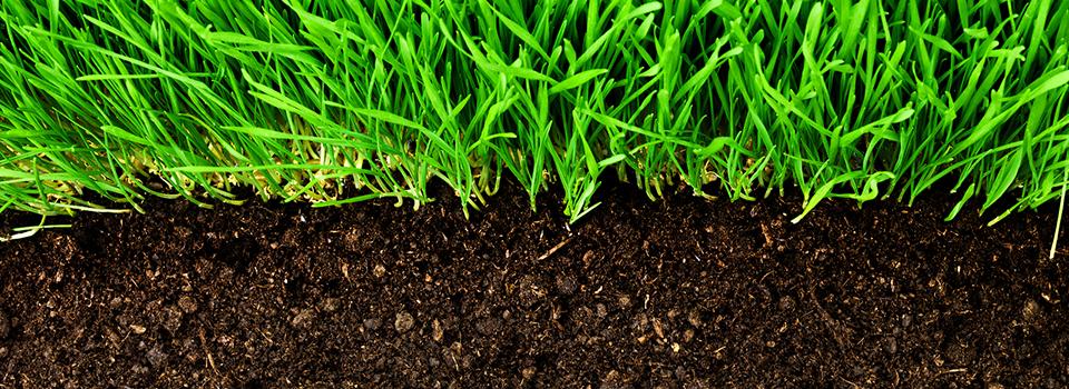 healthy-grass-growing-in-soil