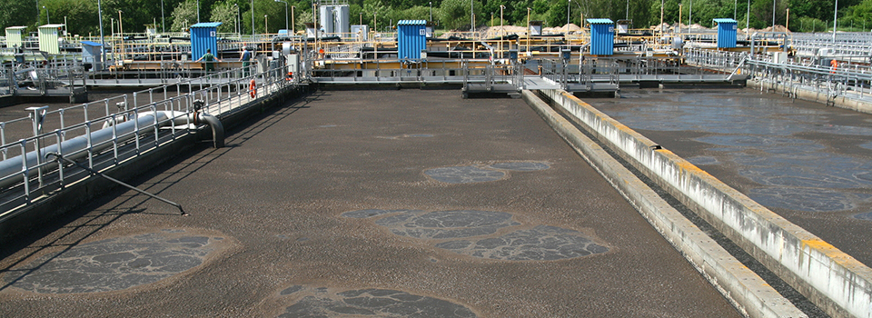 municipal wastewater sludge