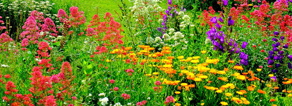 thriving-flower-garden