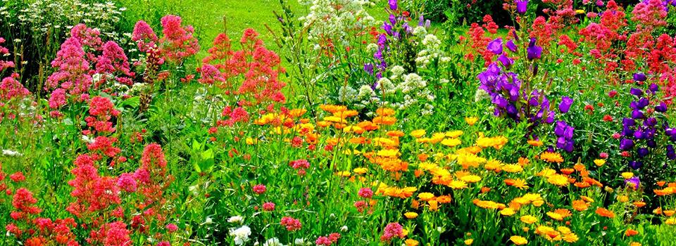 thriving-flower-garden